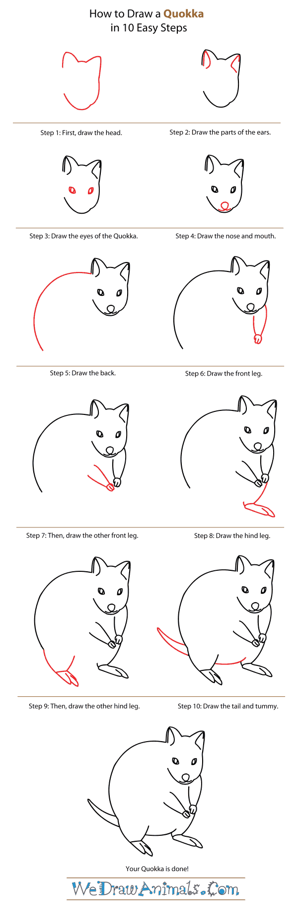 How to Draw a Quokka - Step-By-Step Tutorial