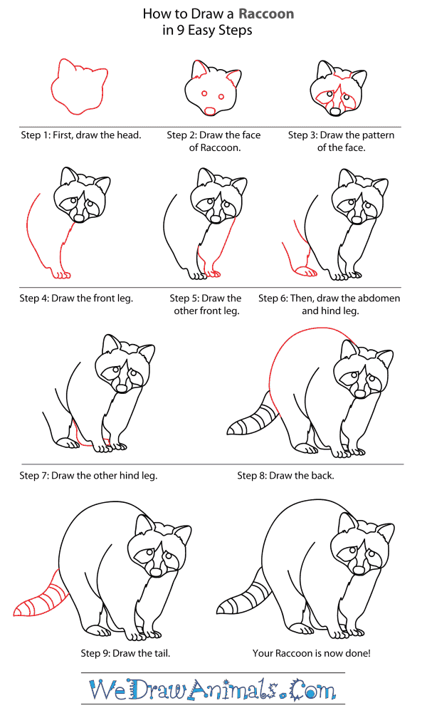 How to Draw a Raccoon Dog - Step-By-Step Tutorial