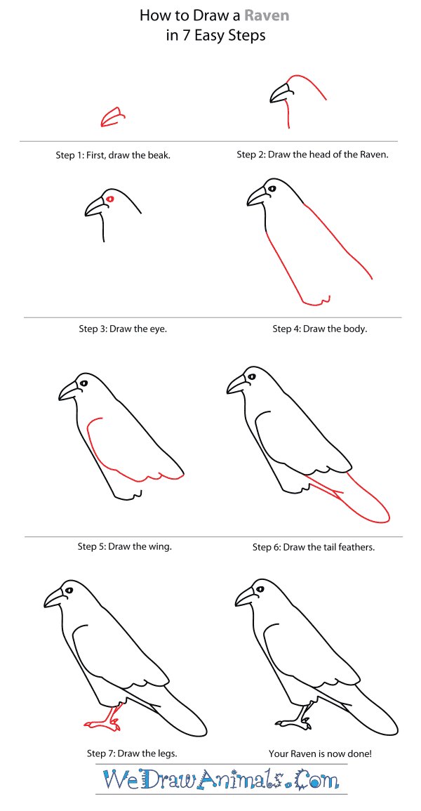 How to Draw a Raven - Step-By-Step Tutorial