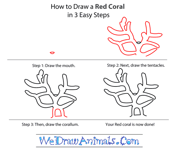 How to Draw a Red Coral - Step-by-Step Tutorial