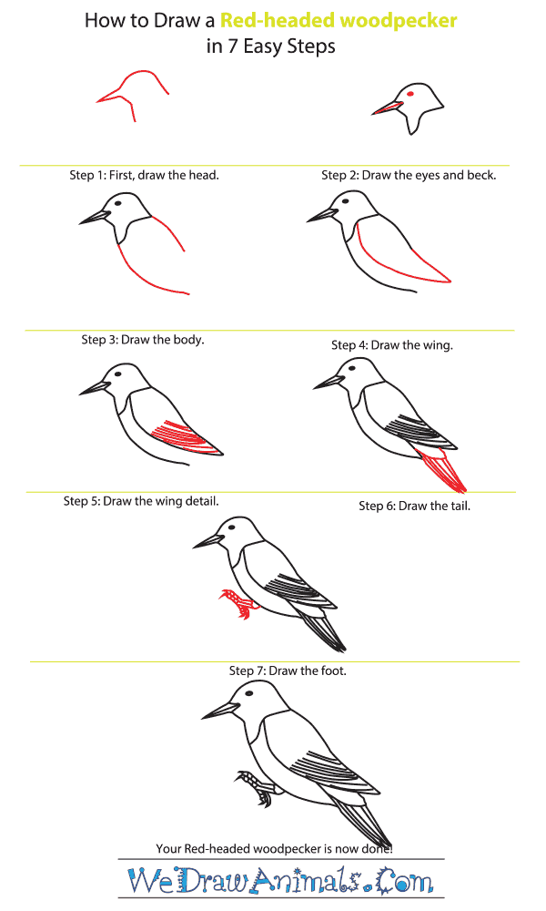 How to Draw a Red-Headed Woodpecker - Step-By-Step Tutorial