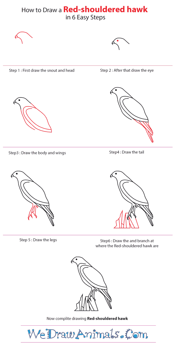 how to draw a red shouldered hawk step by step tutorial