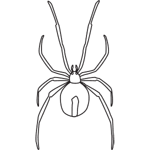 How To Draw a Redback Spider - Step-By-Step Tutorial