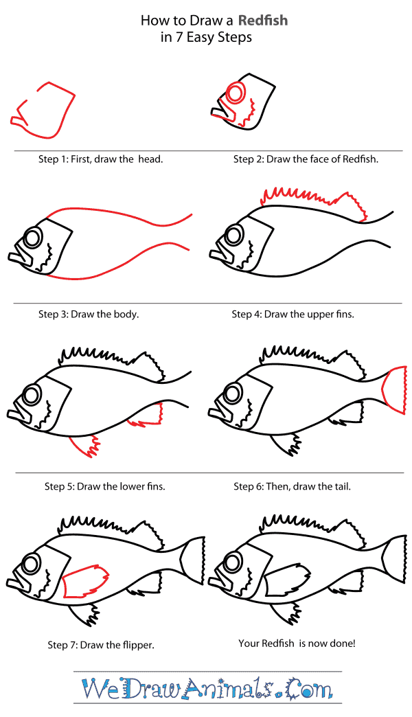 How to Draw a Redfish - Step-By-Step Tutorial