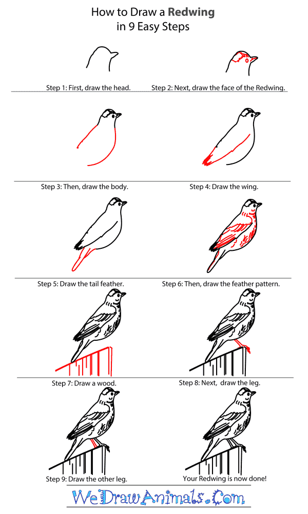 How to Draw a Redwing - Step-By-Step Tutorial