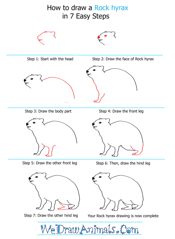 How to Draw a Rock Hyrax - Step-by-Step Tutorial