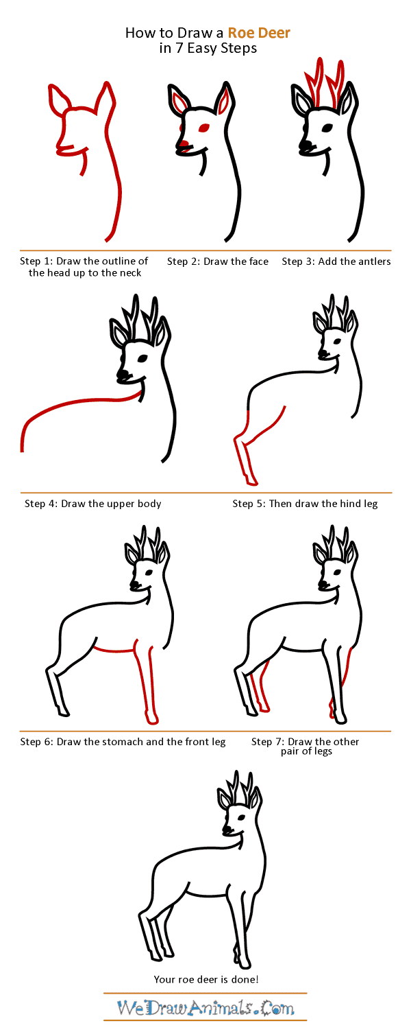 How to Draw a Roe Deer - Step-by-Step Tutorial