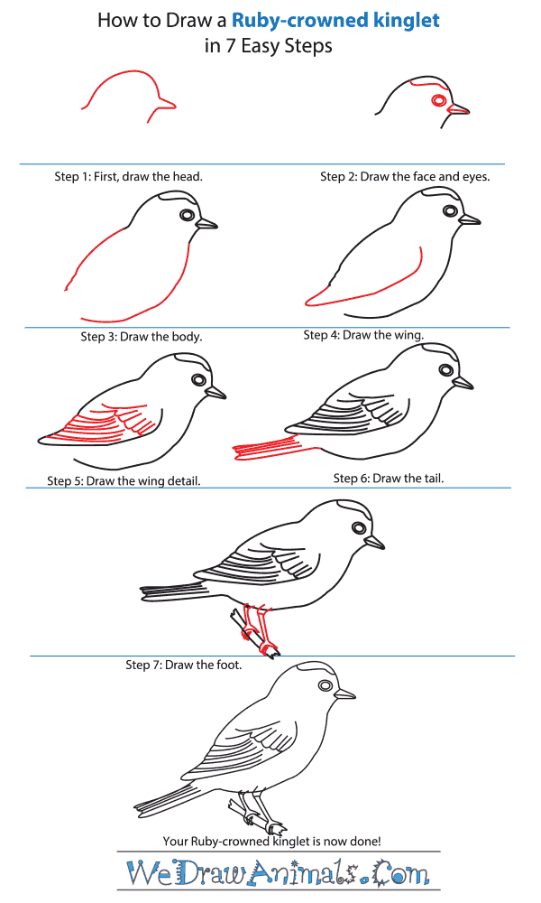 How to Draw a Ruby-Crowned Kinglet - Step-by-Step Tutorial