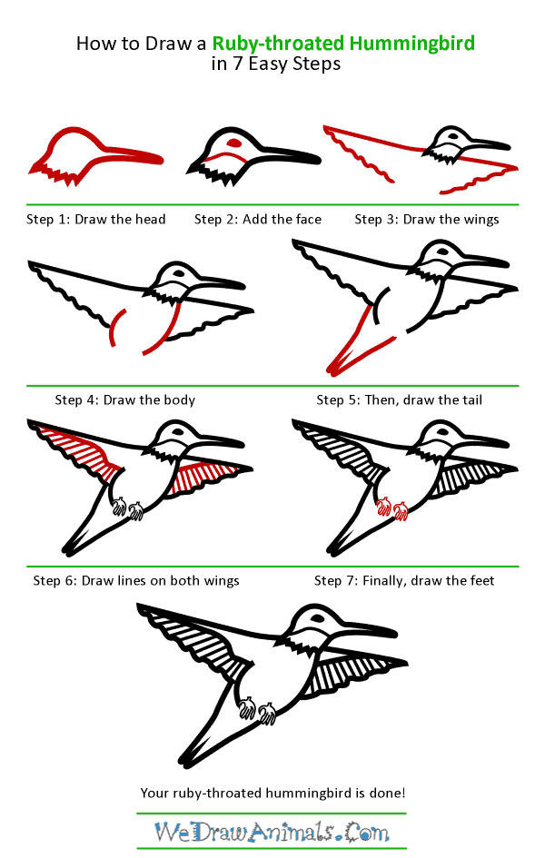 How to Draw a Ruby-Throated Hummingbird - Step-by-Step Tutorial