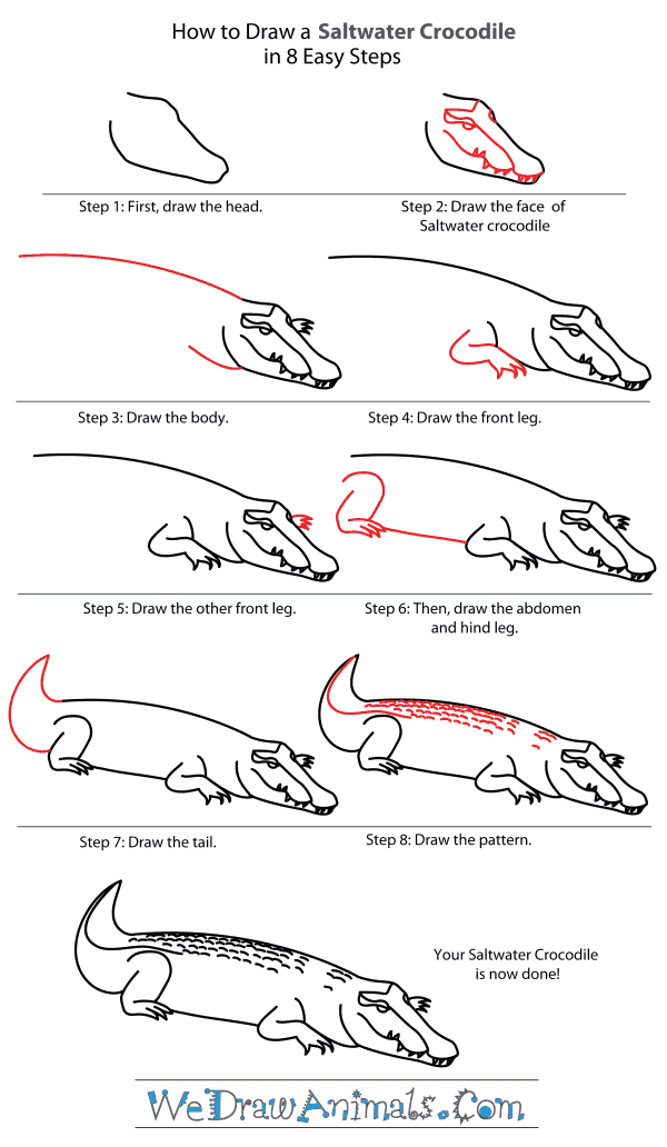 How to Draw a Saltwater Crocodile - Step-By-Step Tutorial