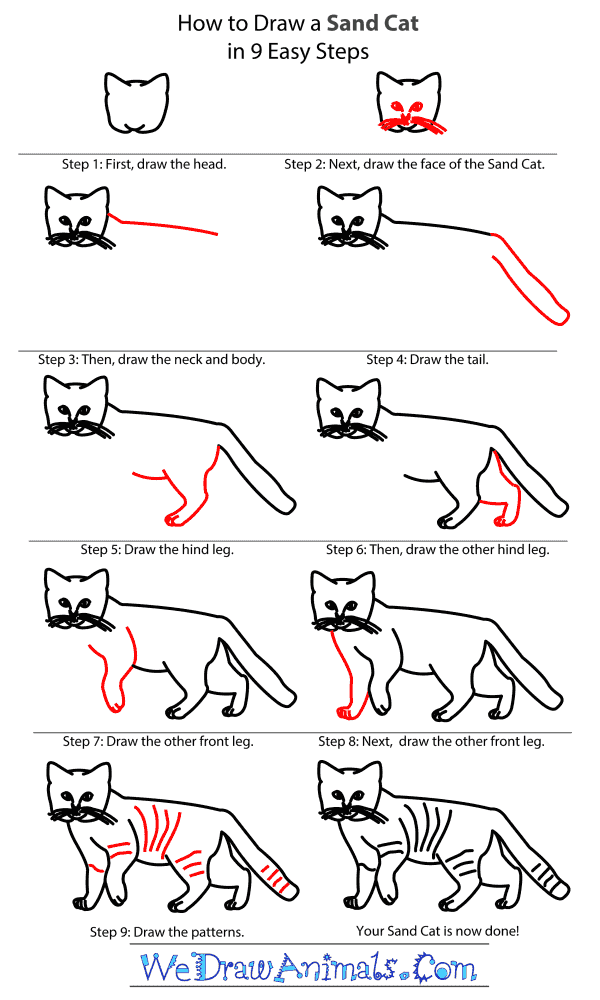 How to Draw a Sand Cat - Step-By-Step Tutorial