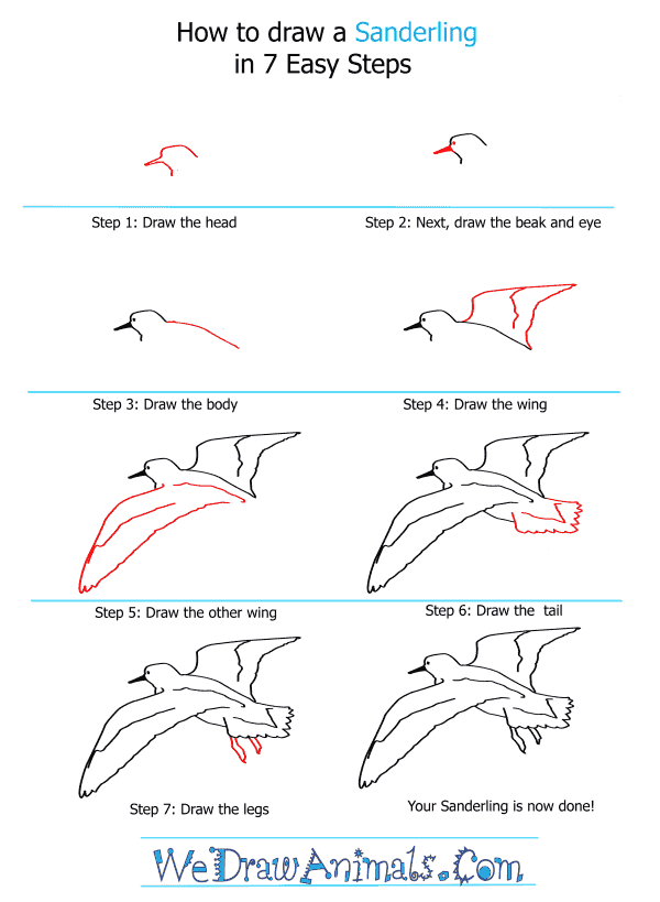 How to Draw a Sanderling - Step-by-Step Tutorial
