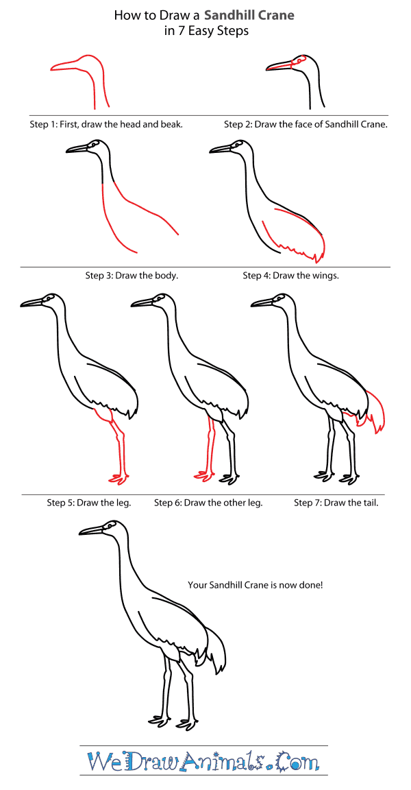 How to Draw a Sandhill Crane - Step-By-Step Tutorial