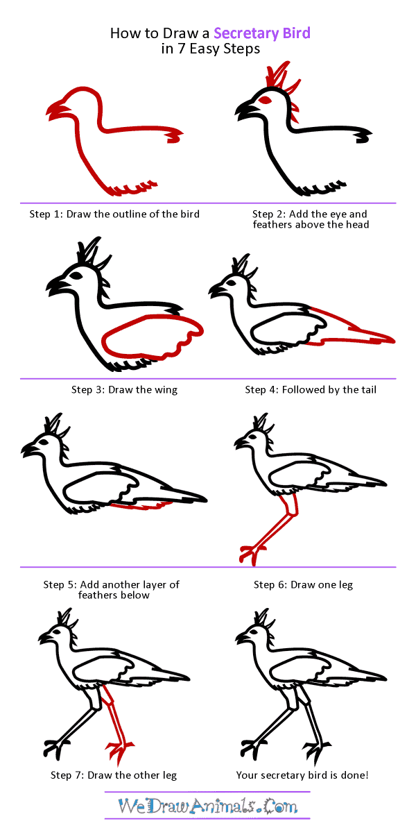 How to Draw a Secretary Bird - Step-by-Step Tutorial