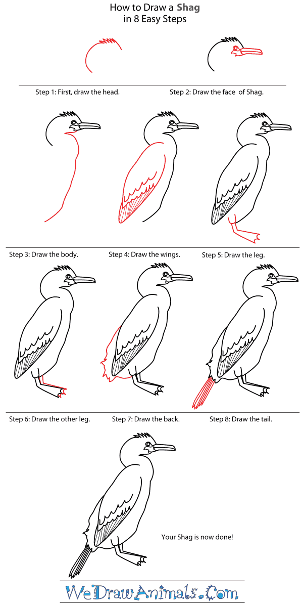 How to Draw a Shag - Step-By-Step Tutorial
