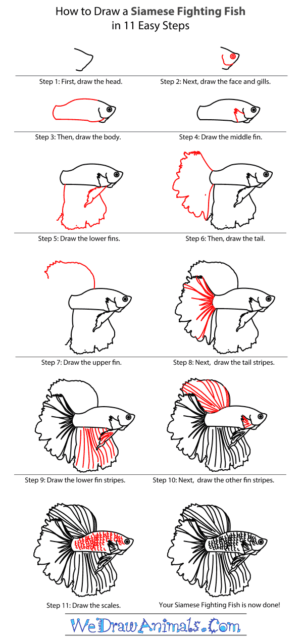 How to Draw a Siamese Fighting Fish - Step-By-Step Tutorial
