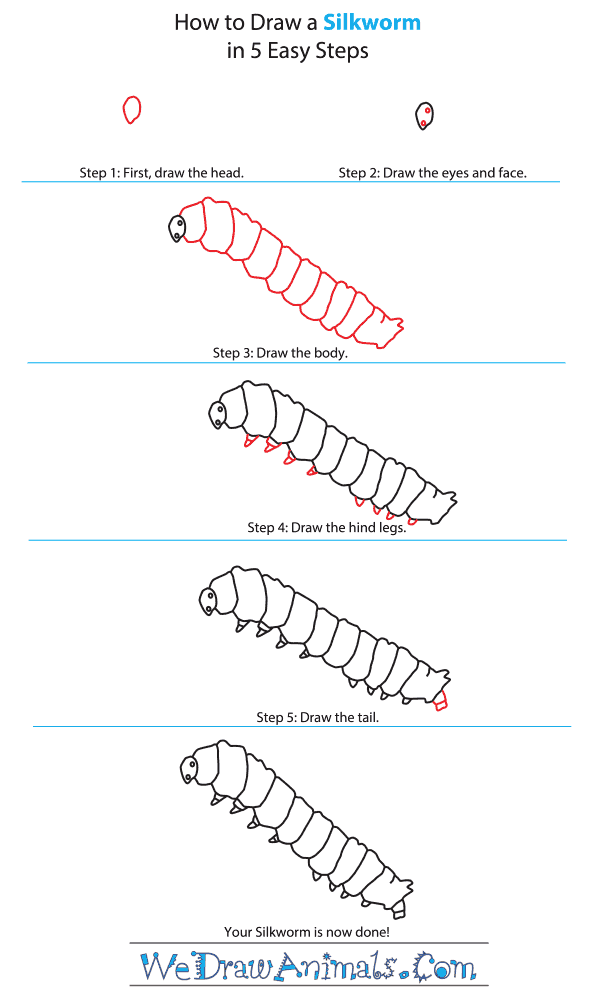 How to Draw a Silkworm - Step-By-Step Tutorial