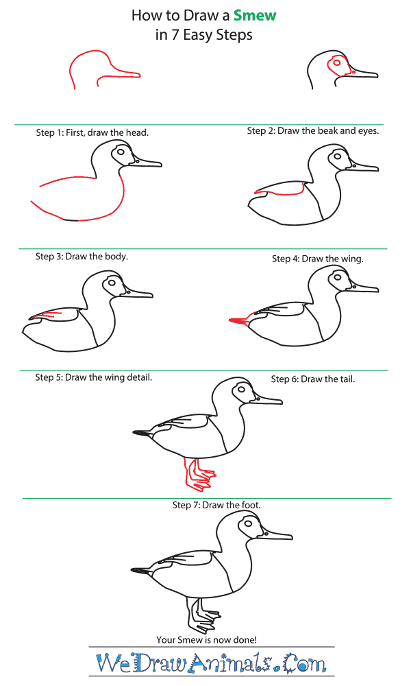 How to Draw a Smew - Step-by-Step Tutorial