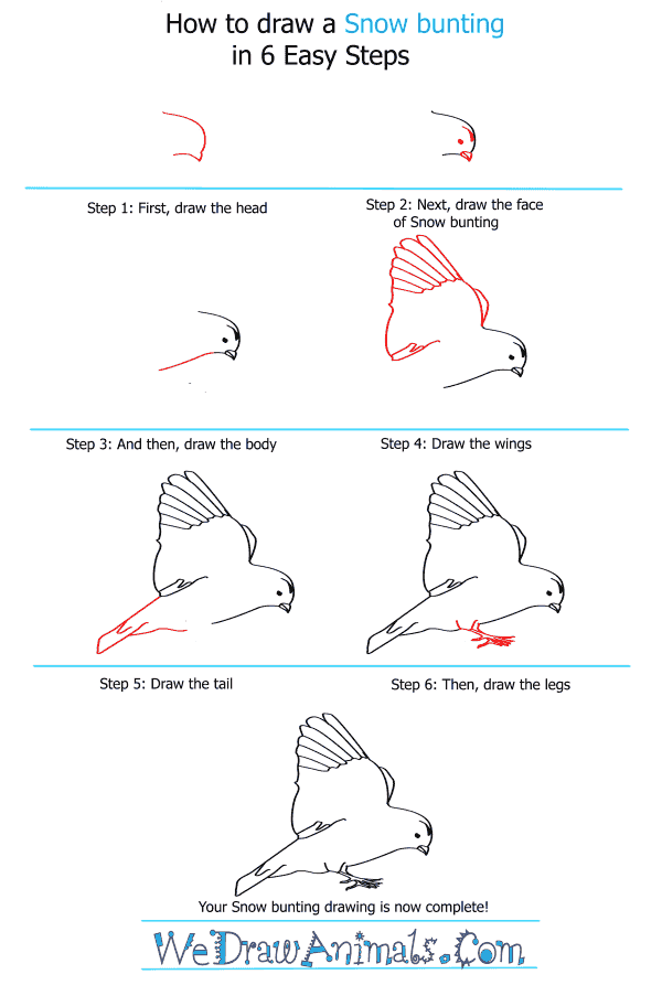 How to Draw a Snow Bunting - Step-by-Step Tutorial
