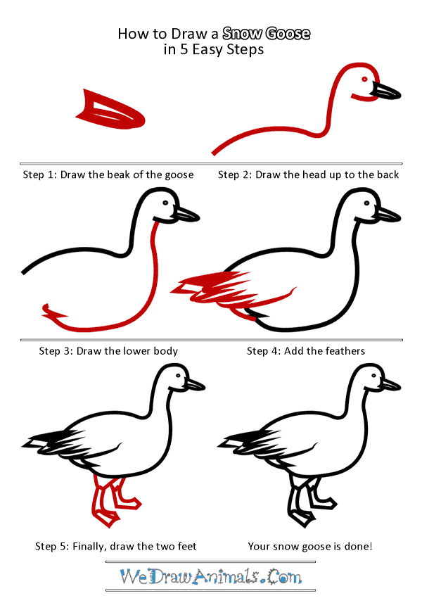 How to Draw a Snow Goose - Step-by-Step Tutorial