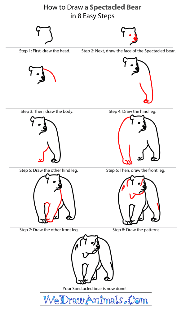How to Draw a Spectacled Bear - Step-by-Step Tutorial