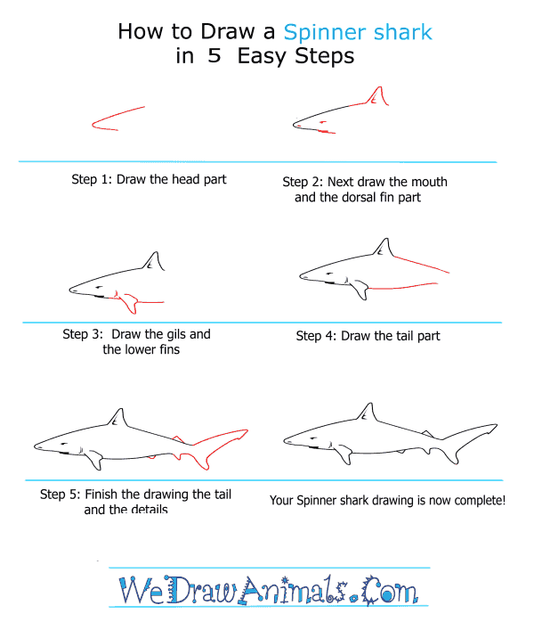 How to Draw a Spinner Shark - Step-by-Step Tutorial