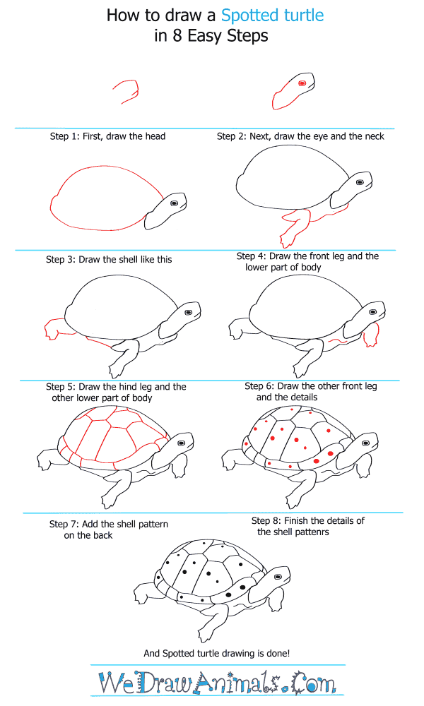 How to Draw a Spotted Turtle - Step-by-Step Tutorial