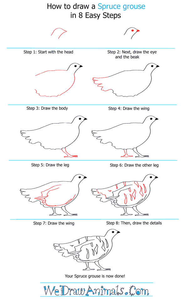 How to Draw a Spruce Grouse - Step-by-Step Tutorial