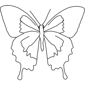 How To Draw a Swallowtail Butterfly - Step-By-Step Tutorial