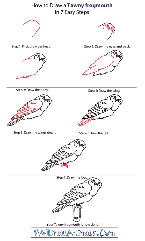 How to Draw a Tawny Frogmouth - Step-by-Step Tutorial