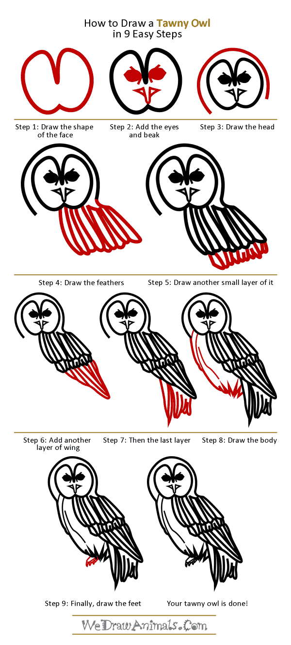 How to Draw a Tawny Owl - Step-by-Step Tutorial