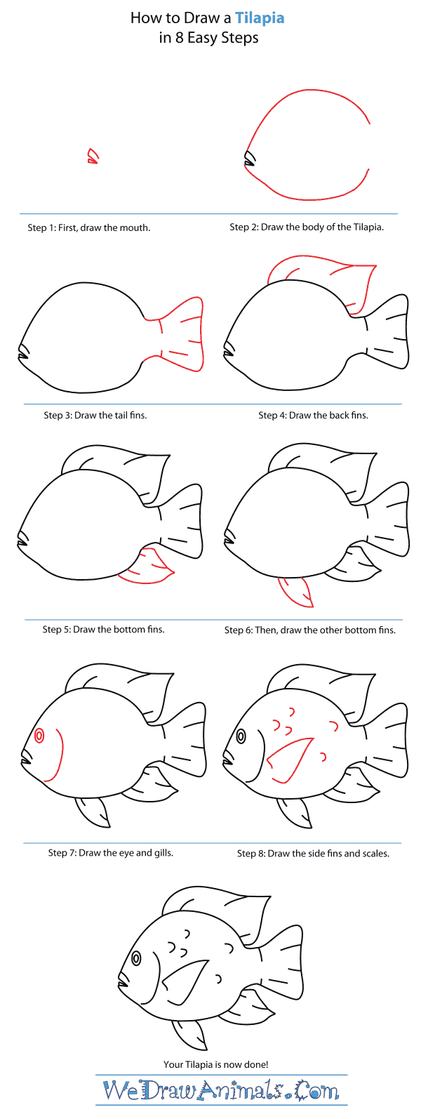 How To Draw A Tilapia  Stepbystep Tutorial