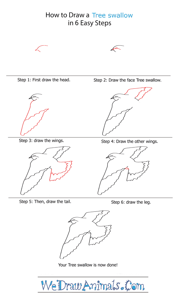 How to Draw a Tree Swallow - Step-by-Step Tutorial