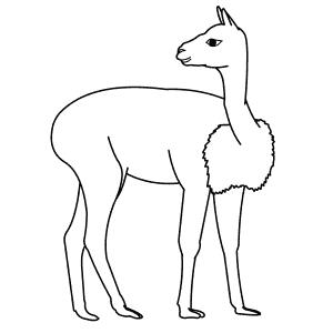 How To Draw a Vicuna - Step-By-Step Tutorial