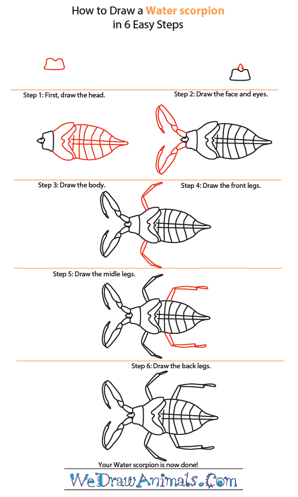 How to Draw a Water Scorpion - Step-by-Step Tutorial