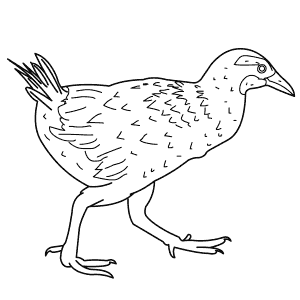 How To Draw a Weka - Step-By-Step Tutorial