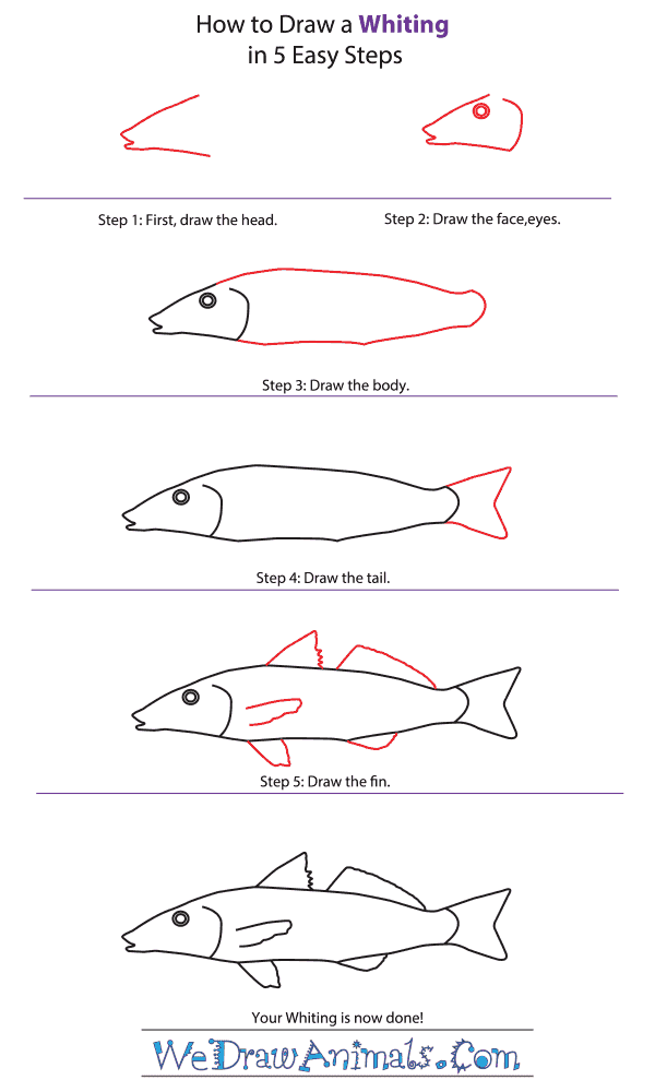 How to Draw a Whiting - Step-by-Step Tutorial