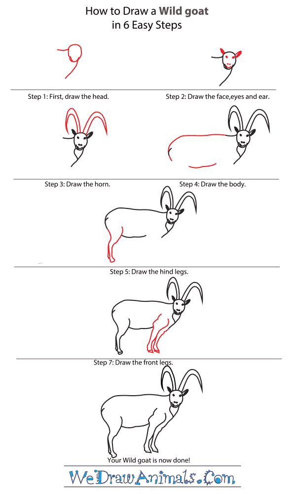 How to Draw a Wild Goat - Step-by-Step Tutorial