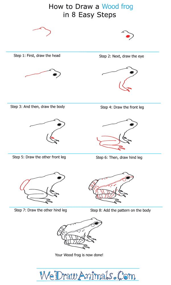 How to Draw a Wood Frog - Step-by-Step Tutorial