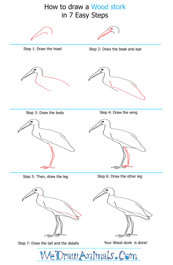 How to Draw a Wood Stork - Step-by-Step Tutorial
