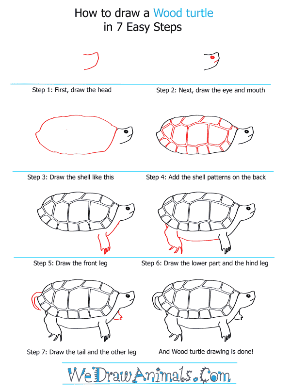 How to draw a wood turtle step by step tutorial