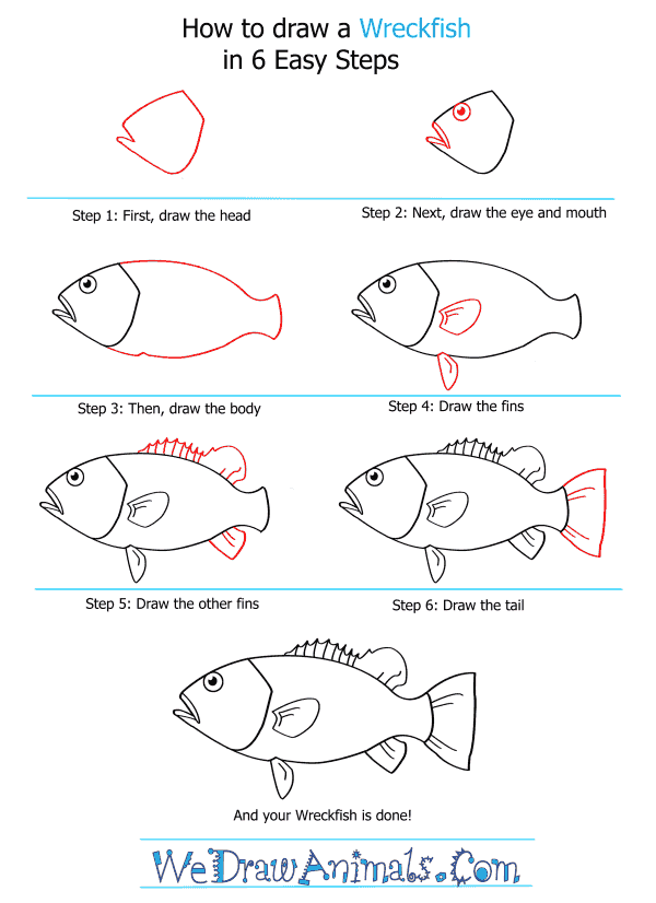 How to Draw a Wreckfish - Step-by-Step Tutorial