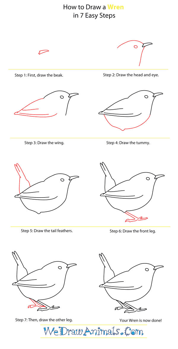 How to Draw a Wren