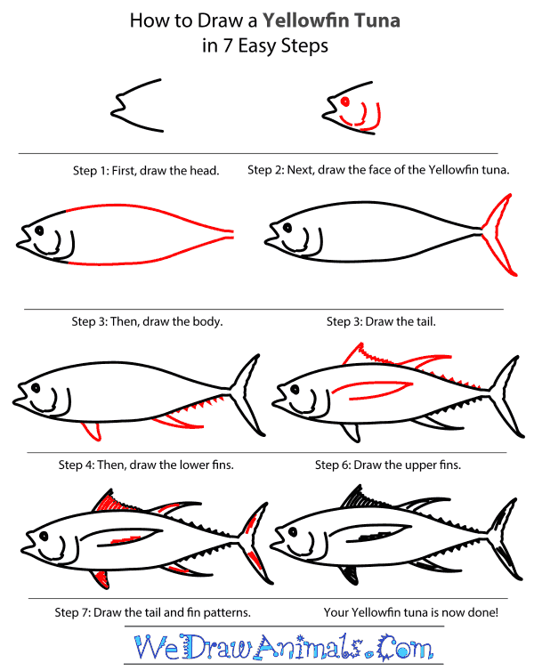 How to Draw a Yellowfin Tuna - Step-By-Step Tutorial