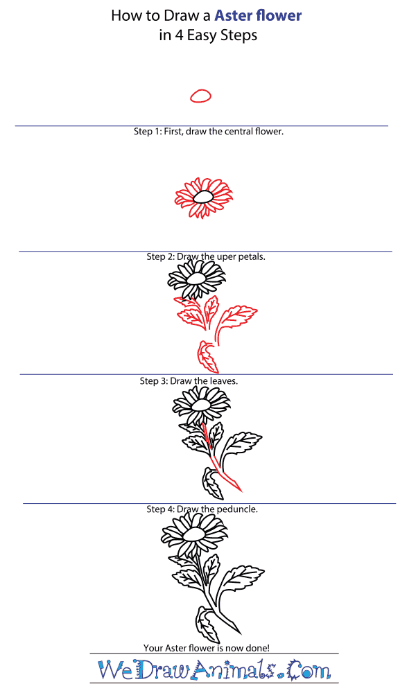 Aster Flower Line Drawing : Aster flower drawing savingourboys