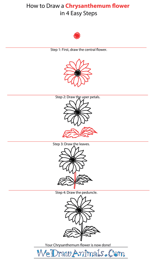 How to Draw a Chrysanthemum Flower - Step-by-Step Tutorial