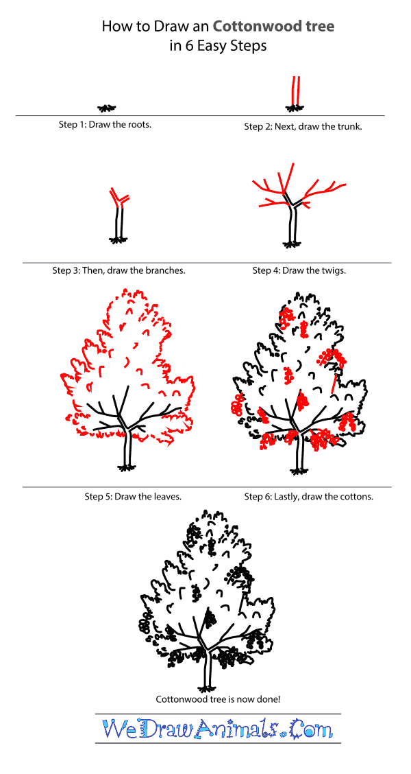 How to Draw a Cottonwood Tree - Step-by-Step Tutorial