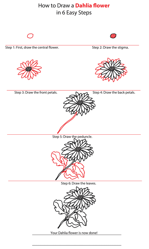 How to Draw a Dahlia Flower - Step-by-Step Tutorial