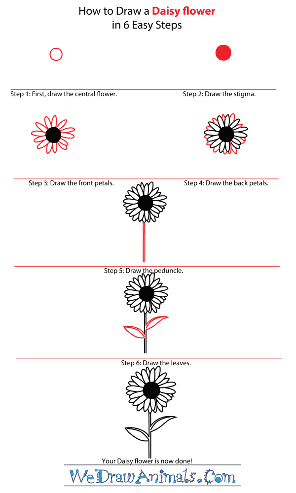 How to Draw a Daisy Flower - Step-by-Step Tutorial