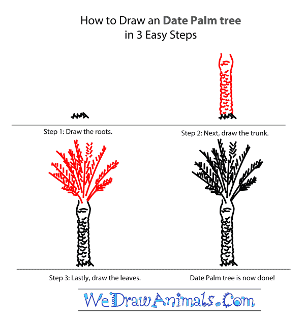 How to Draw a Date Palm Tree - Step-by-Step Tutorial